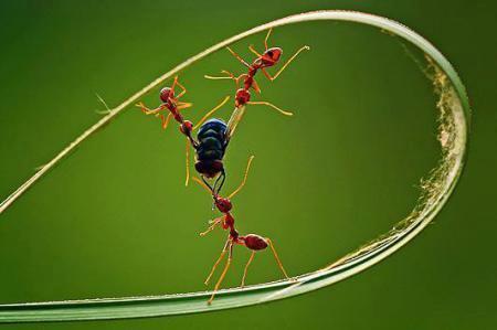 semut & lalat
